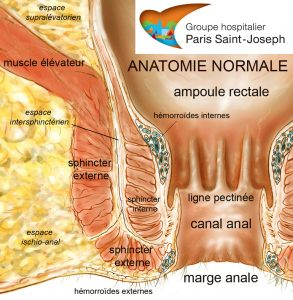 anatomie_normale